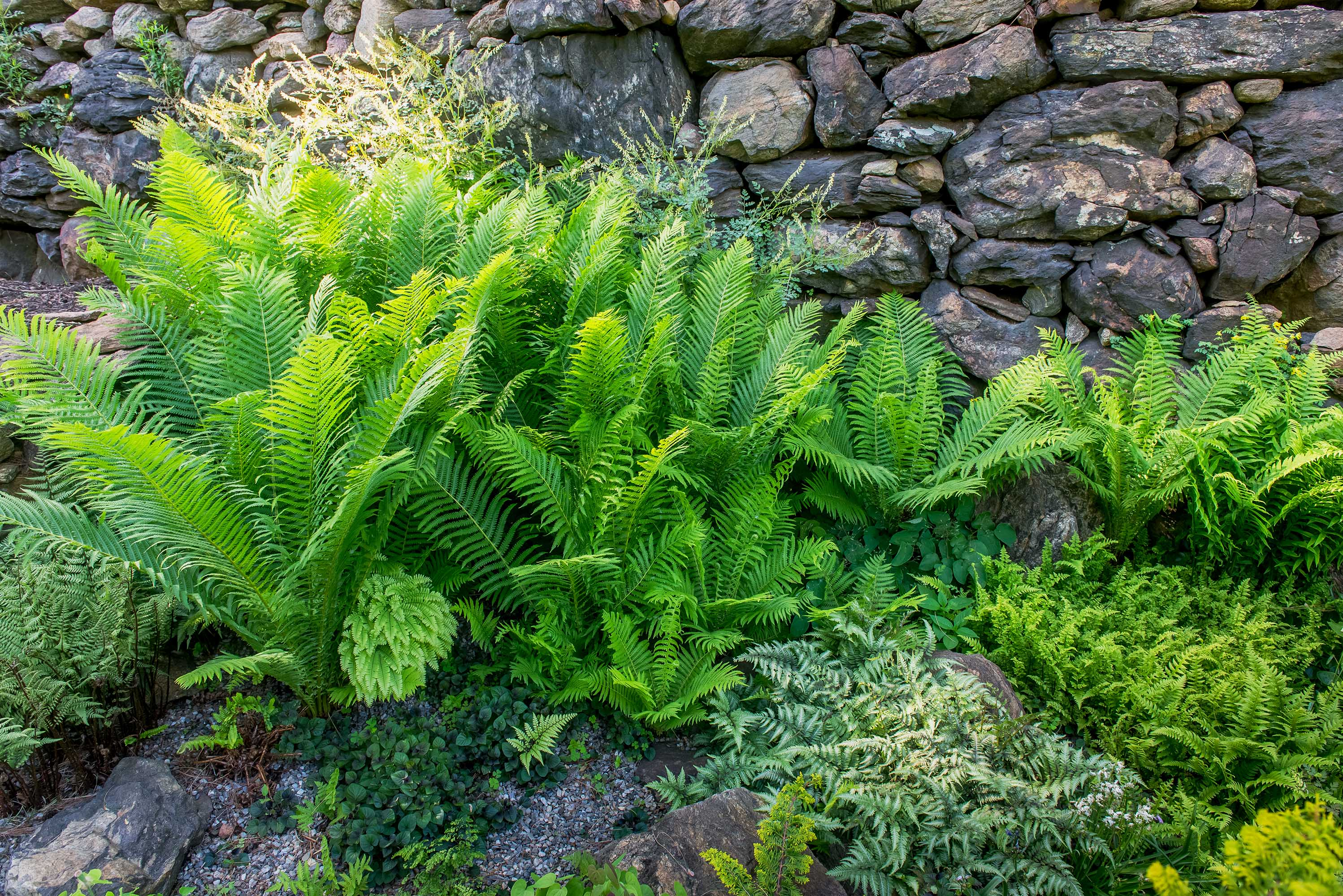 Ferns can thrive in a variety of environments, including squeezed between large boulders.