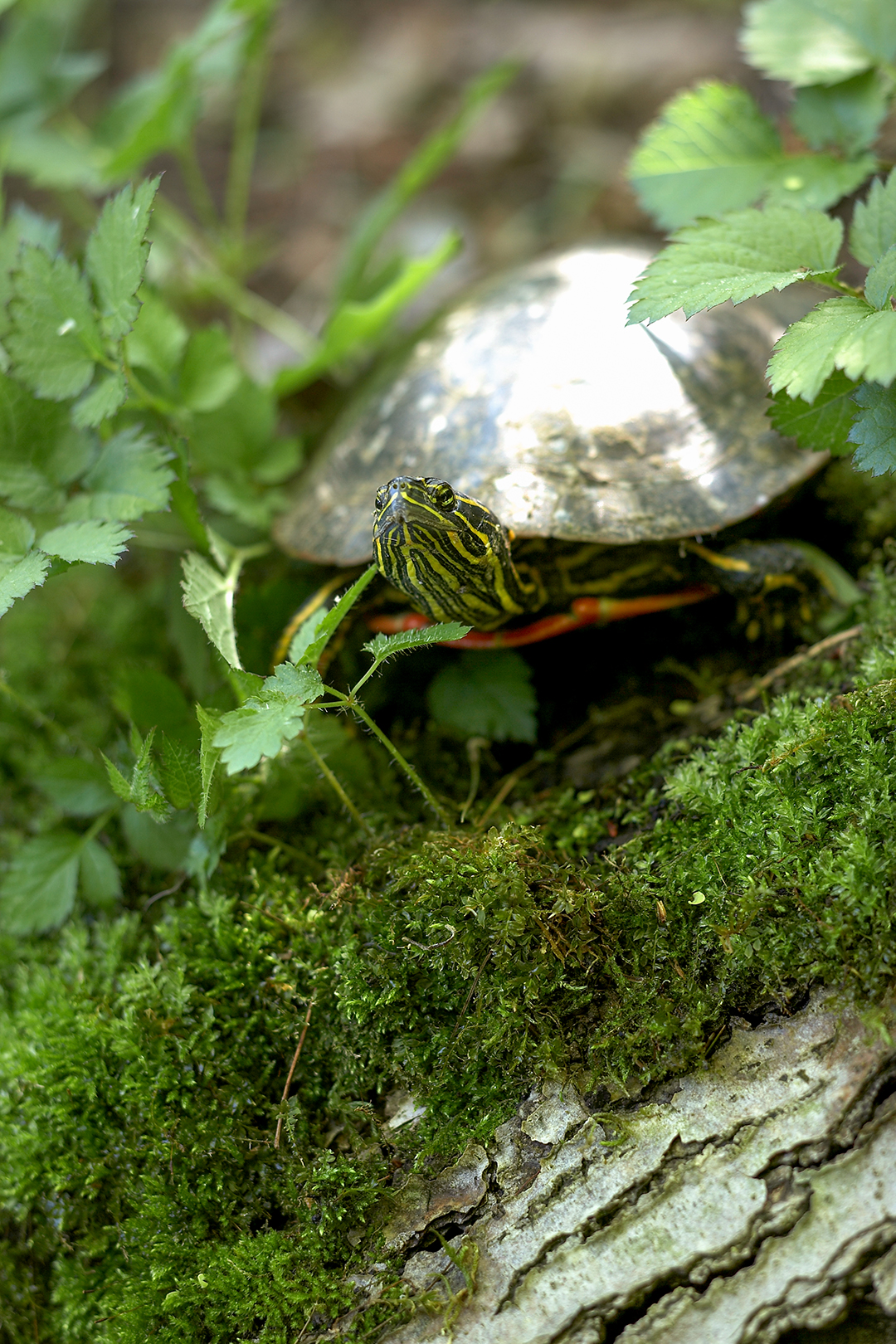 mossy tree branch with turtle on top