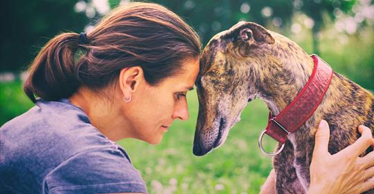 WATCH: In Florida, Thousands of Ex-Racing Greyhounds Will Soon Need Homes