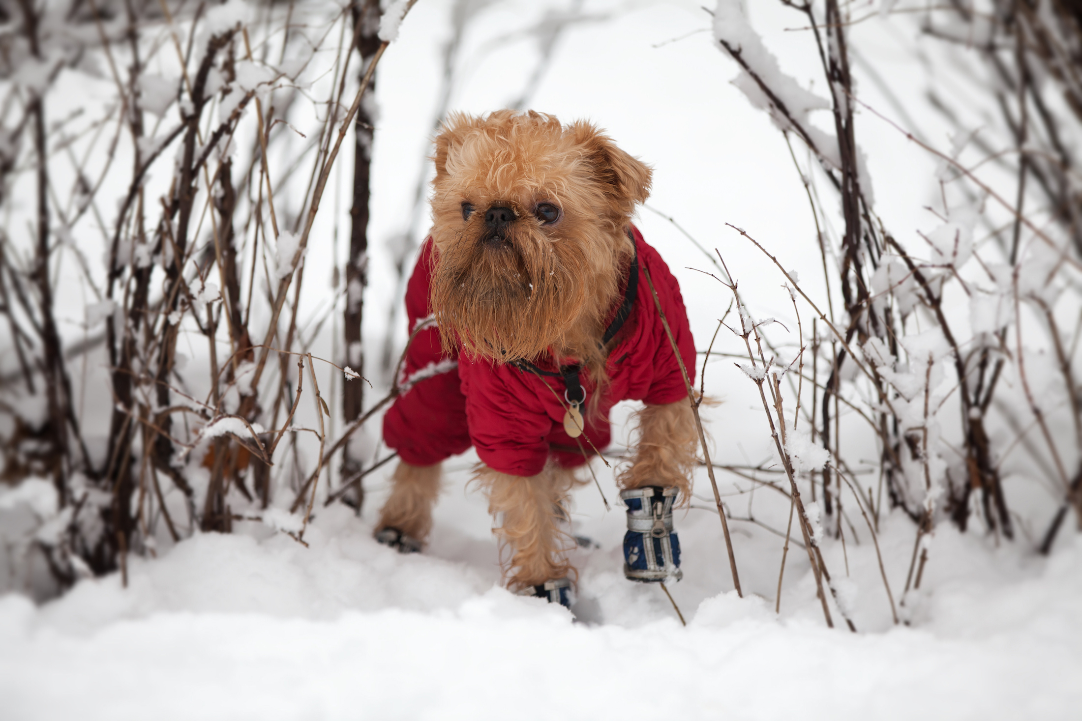 How to Fit a Dog for a Winter Coat, According to the Experts
