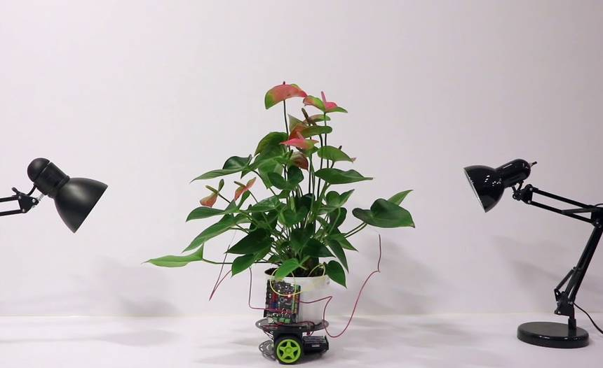 This New Houseplant Robot Will Keep Your Plants Alive