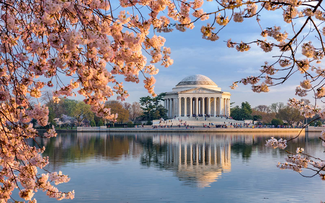 The Best Places to See Cherry Blossoms in 2019 — and When to Plan Your Trip