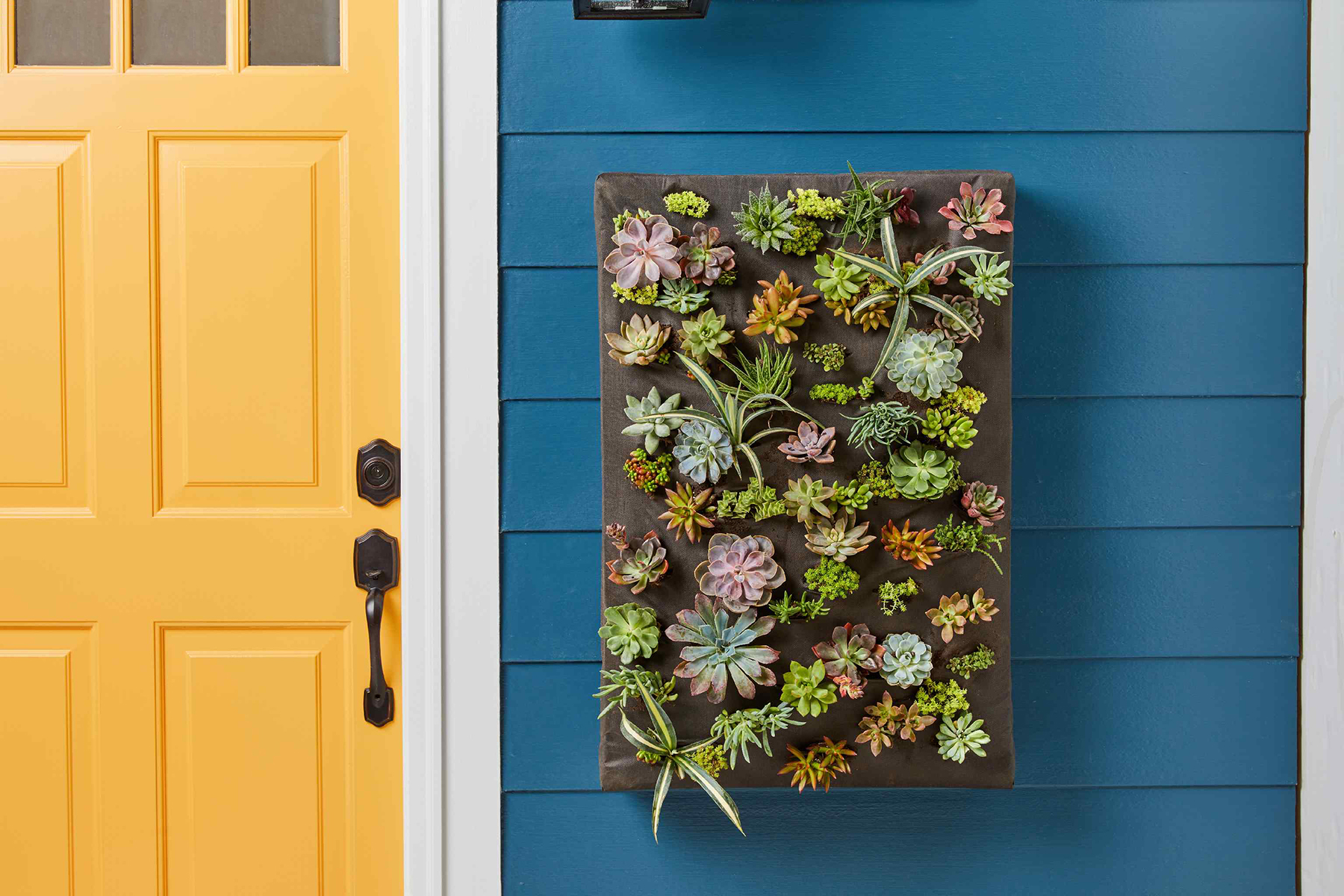 How to Make a Living Wall for a Breathtaking Vertical Garden