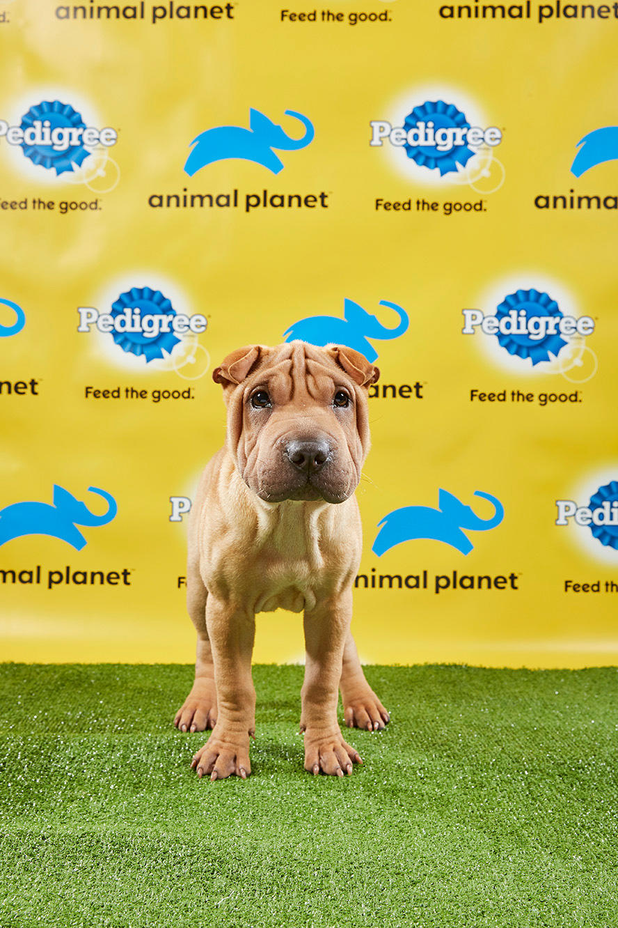 You Have to See the Starting Lineup for the Puppy Bowl