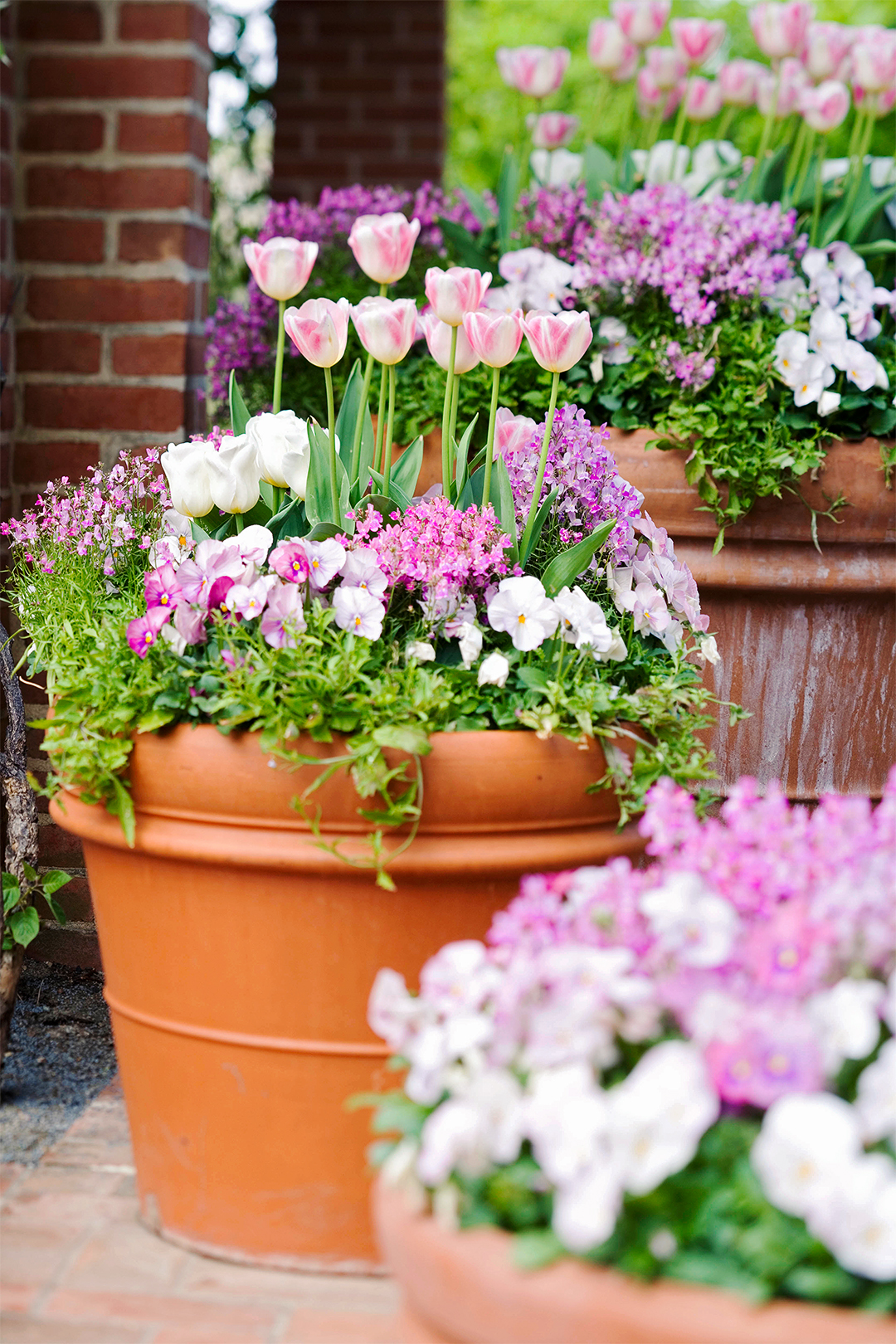 How To Grow Bulbs In Containers Better Homes Gardens