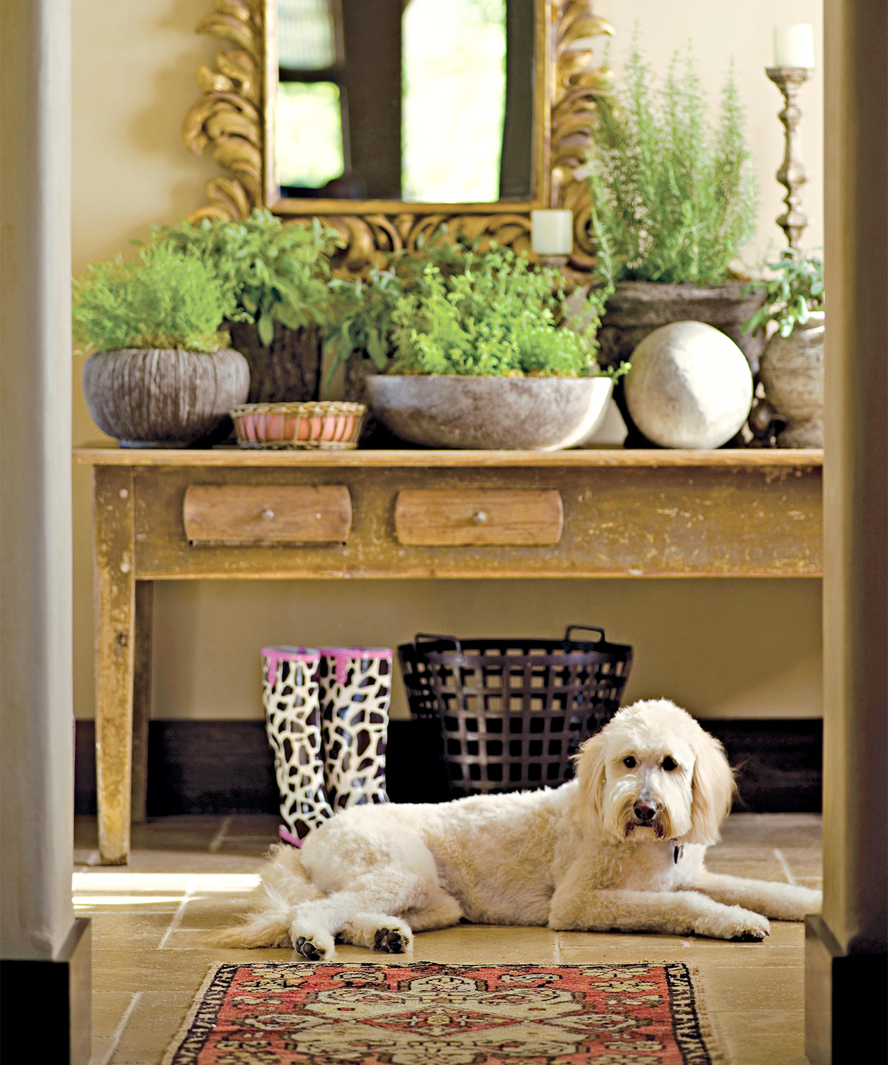 entryway dog with table and herb planters