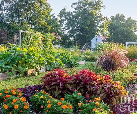 Essential Tips to Planting an Eye-Pleasing Vegetable Garden