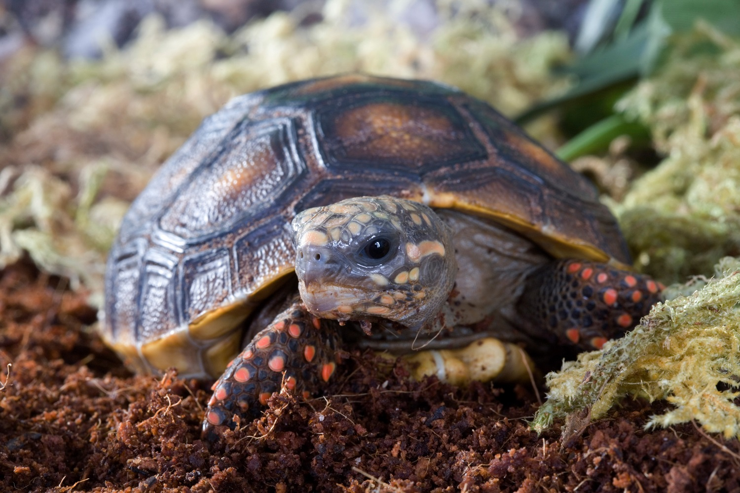 Everything You Need to Know to Care for Your New Pet Turtle