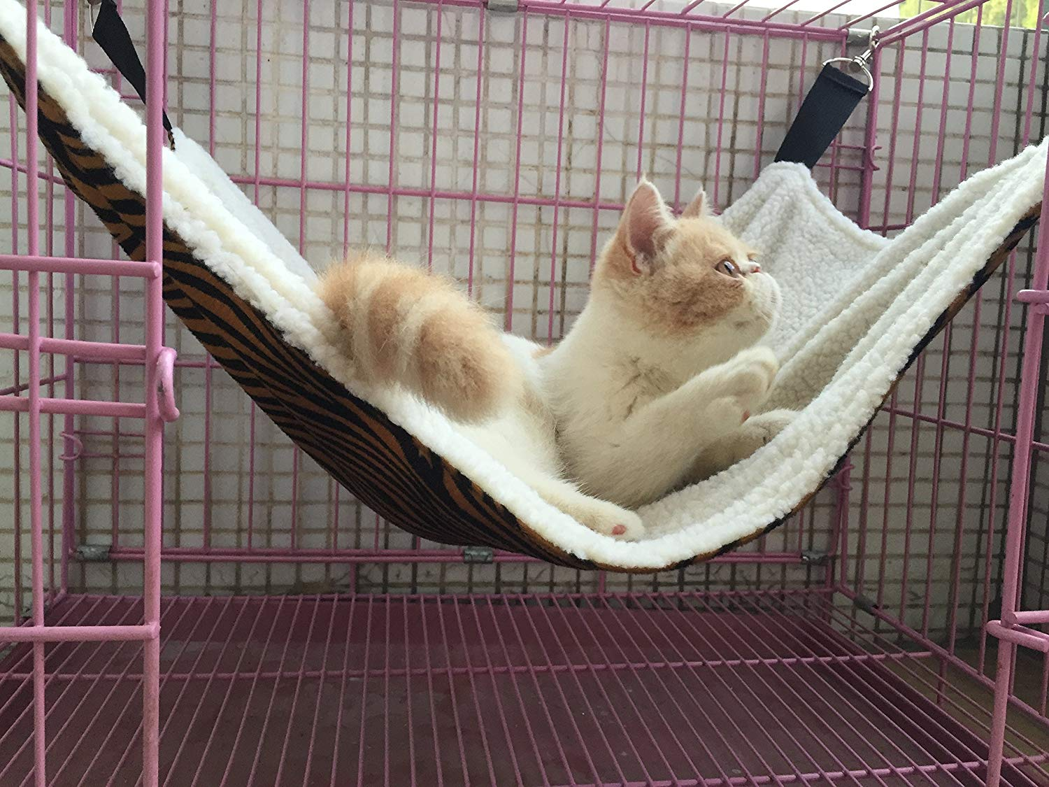 Cat resting in cage on top of hammock
