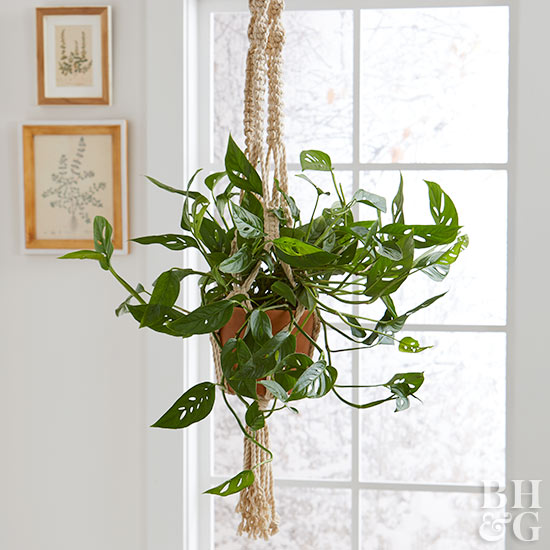Guide to Hanging Plant Hooks