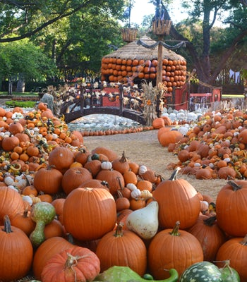 This Epic Fall Village is Made with Over 90,000 Pumpkins