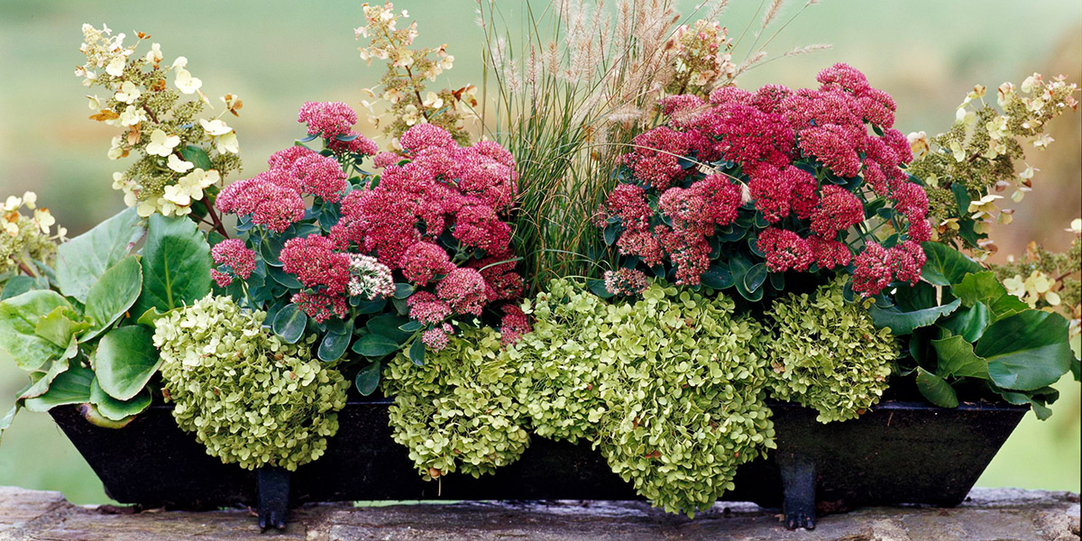 33 fall container garden ideas with planting plans - Better homes and gardens flower pots ...