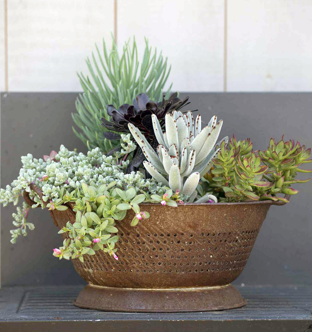 How to Make an Easy Outdoor Succulent Container Garden