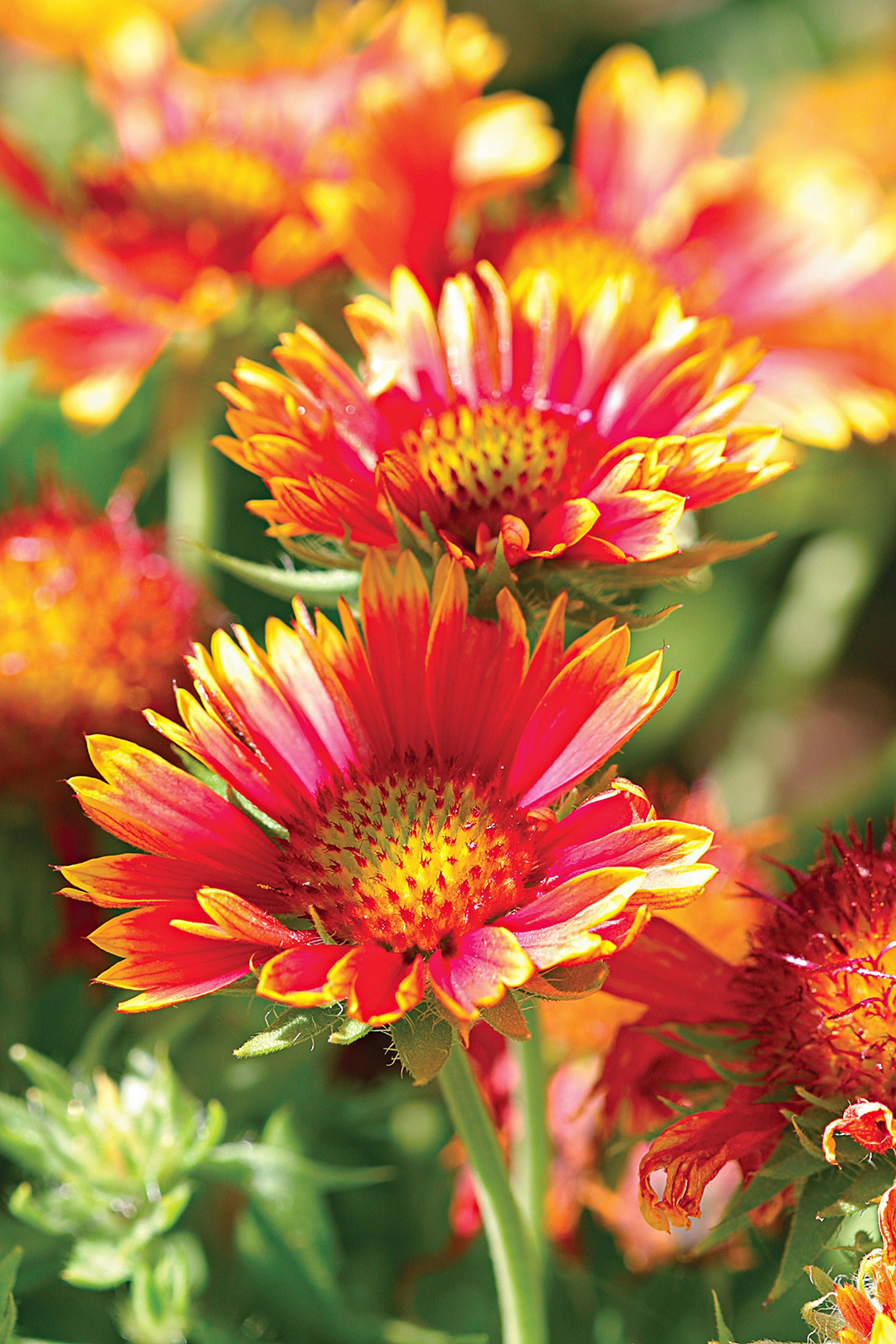 Top 26 Perennials For Your Garden
