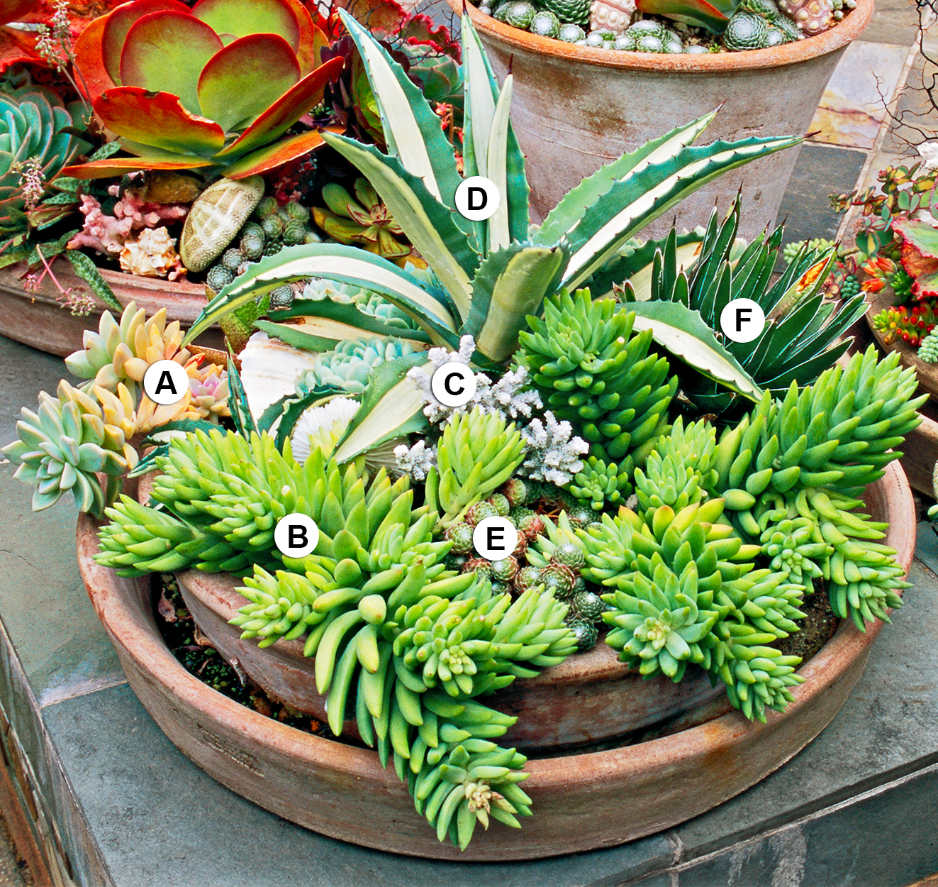 Quiet Corner Container Gardening Ideas: Succulent Container Garden Plans