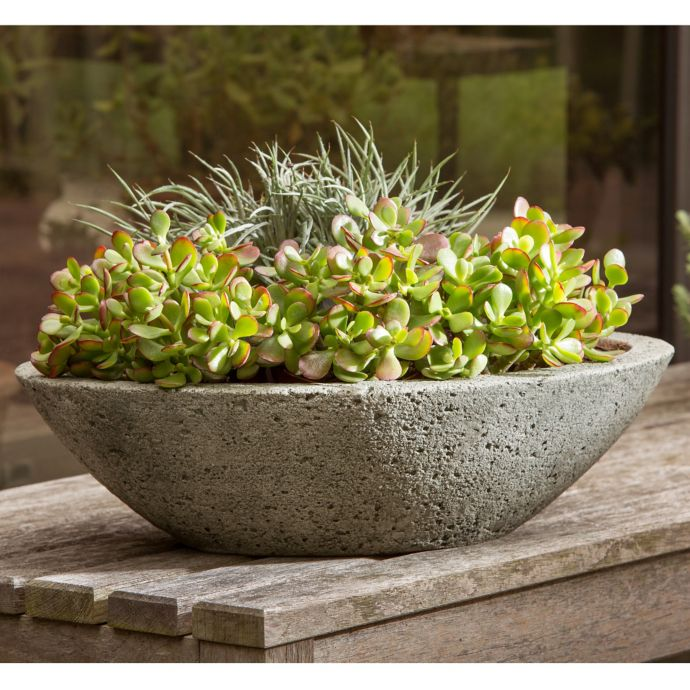 Concrete dish garden bowl filled with lime green succulents