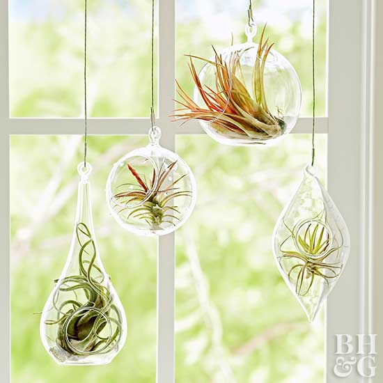 air plant glass capsules