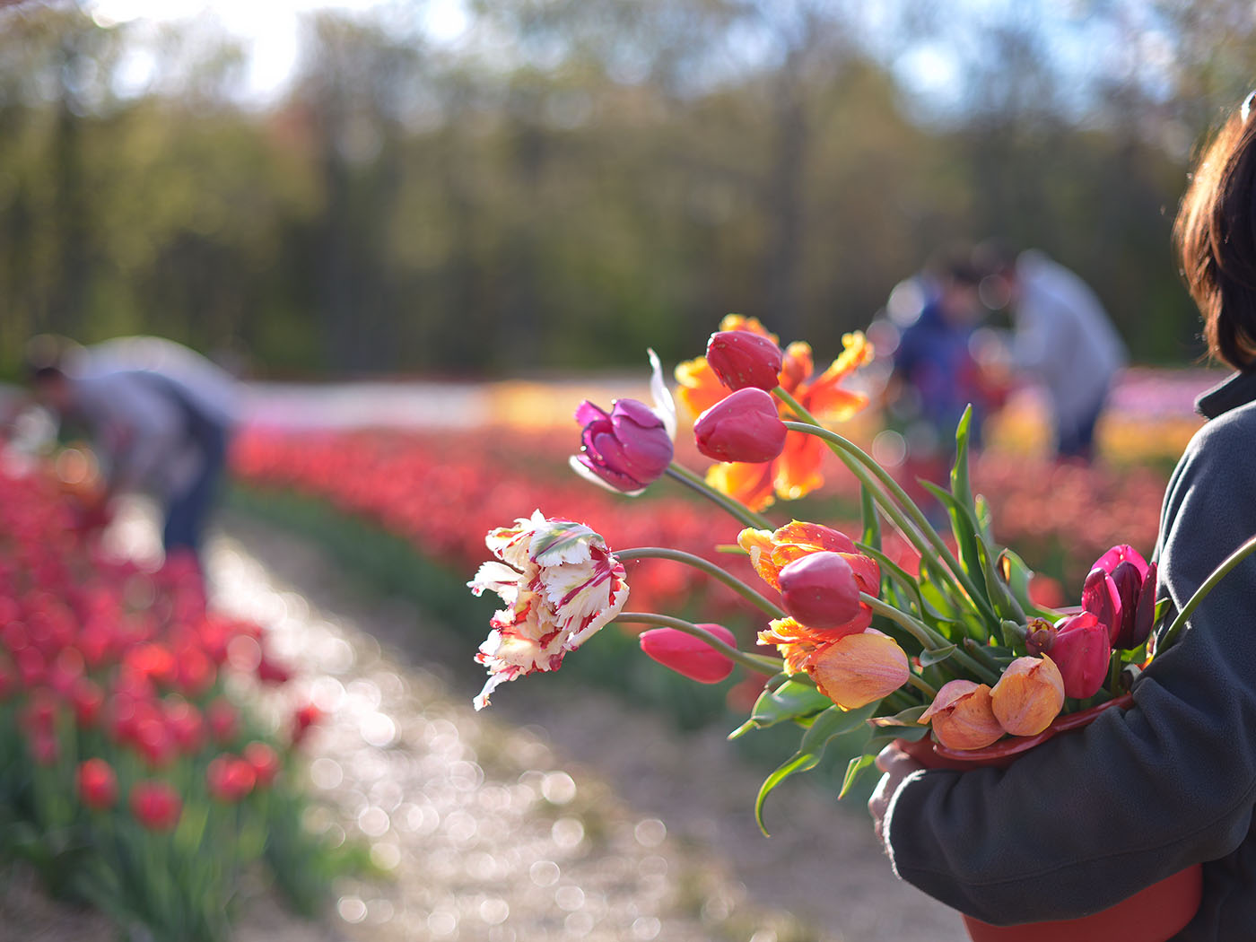 American Tulip Day Is Almost Here and We're Ready to Celebrate