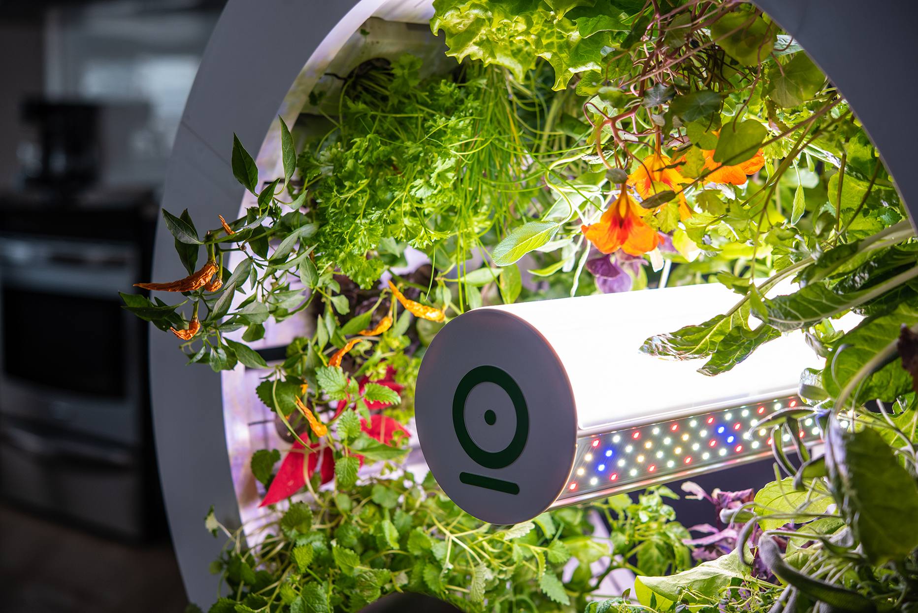Close-up of edible plants growing in top wheel and LED cylinder at center of the wheel