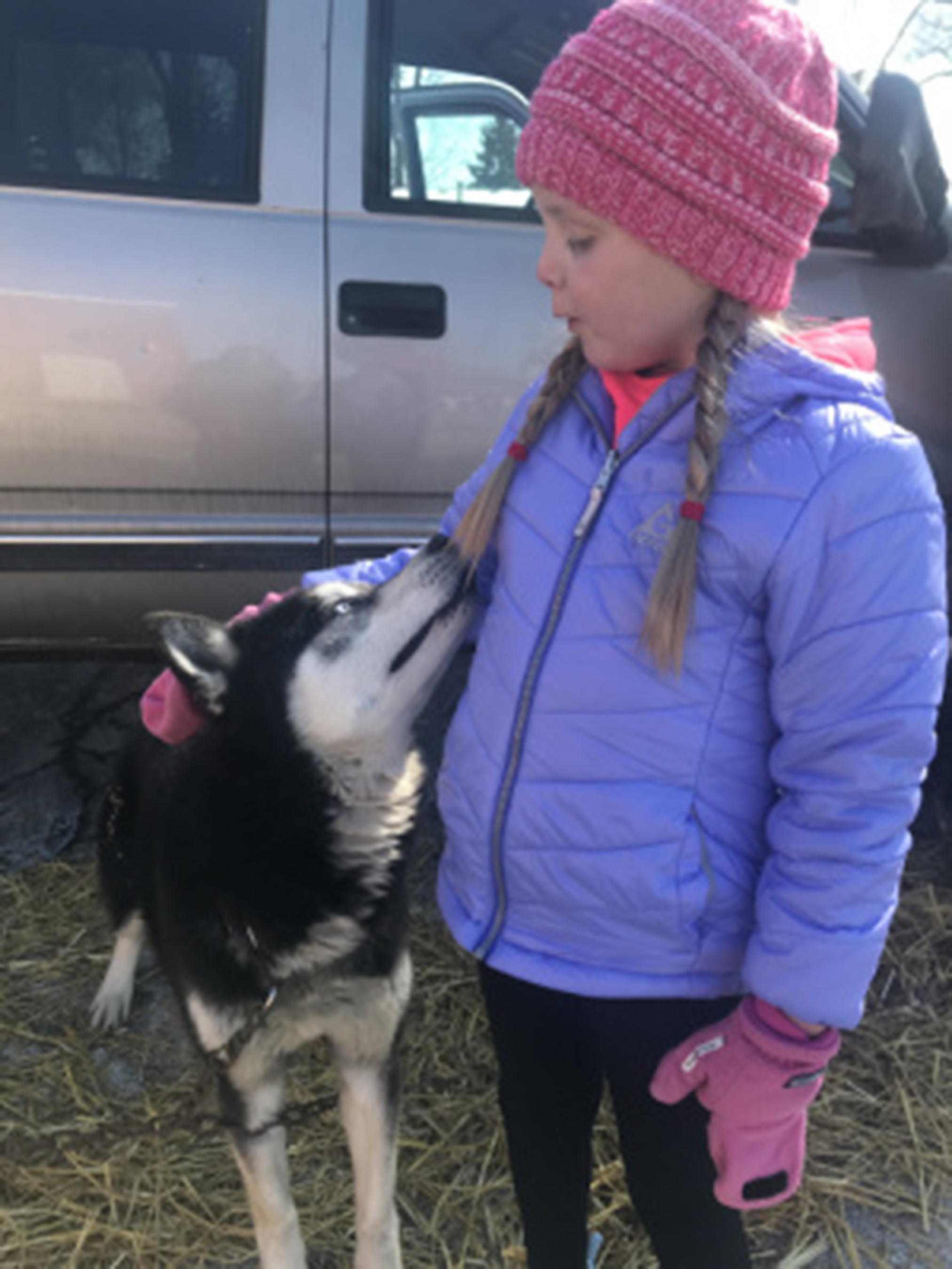 Young girl outside with a husky breed of dog