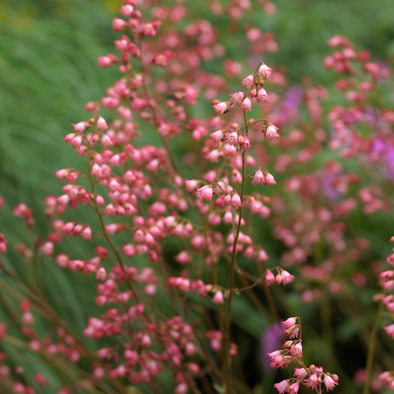 Flowers Similar To Lilies: The 18 Best Plants For Cottage Gardens
