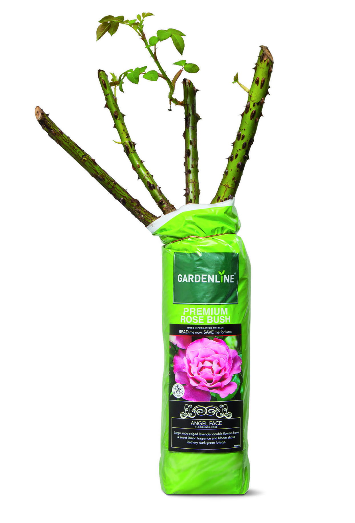 4 Affordable Aldi Gardening Products to Welcome Spring