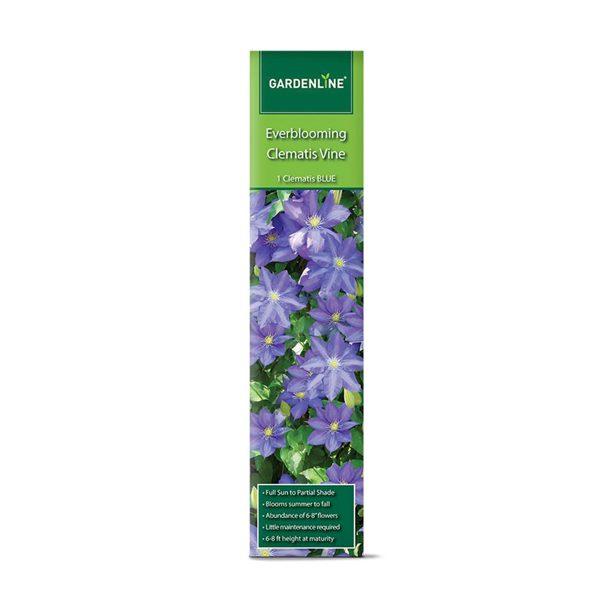 Green packet of Everlasting Blue Clematis vine with image of large blue flowers on package
