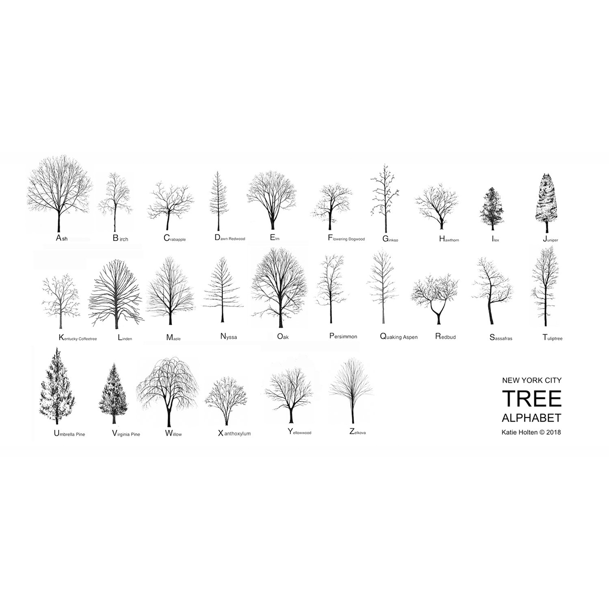 NYC Tree Alphabet font, black and white illustrations for each letter