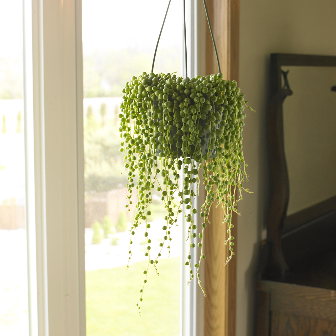 17 Plants Perfect for Hanging in Your Home