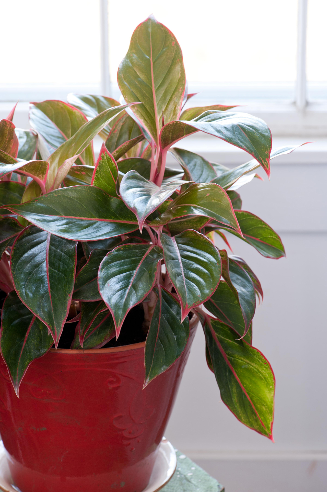 These 5 Houseplants Are Ridiculously Easy to Grow