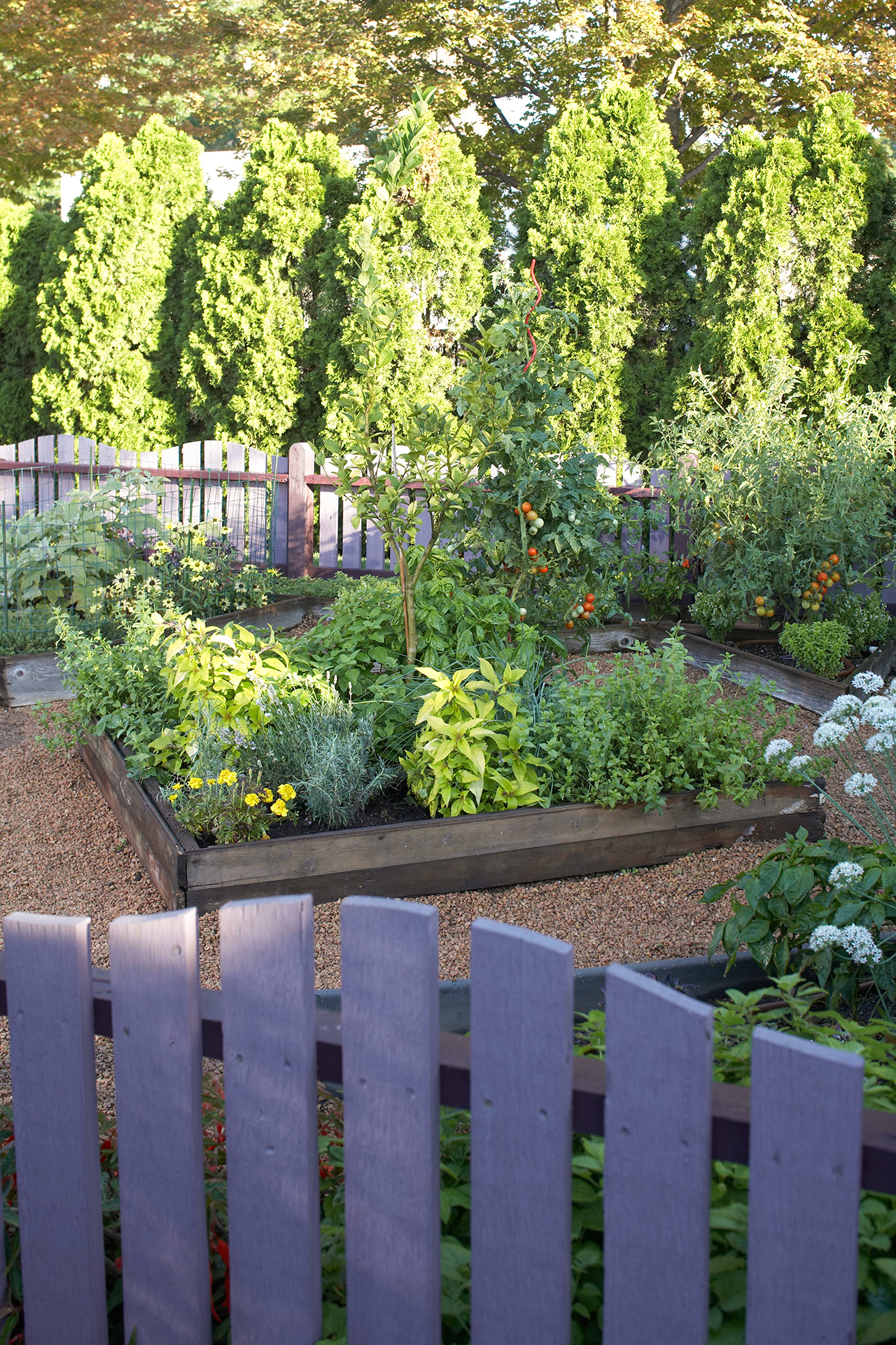 gated vegetable container garden