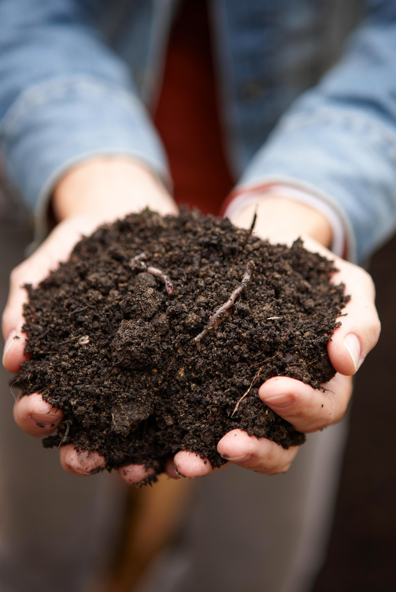 holding soil with worms