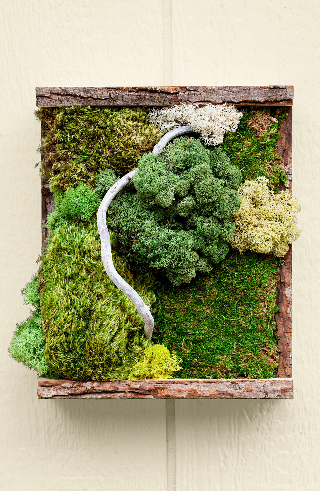 This DIY Moss Wall Art Will Liven Up Your Interiors All Year Long