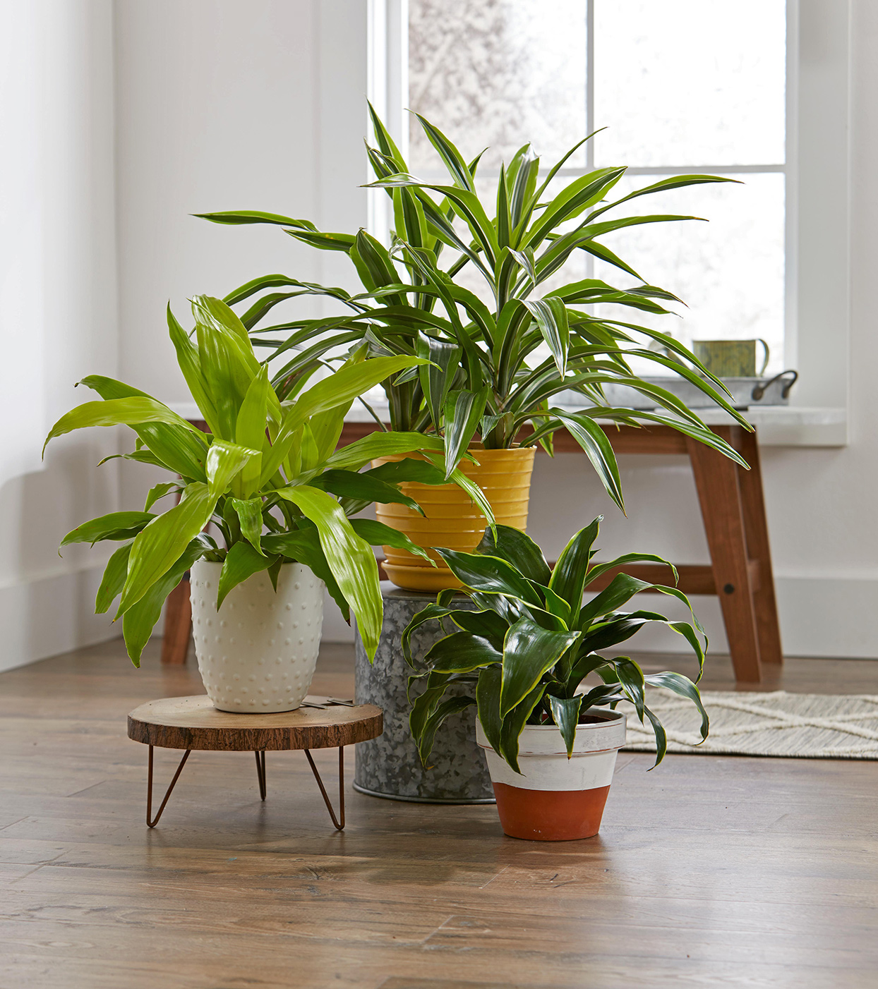Indoor Plants For Low Light Better Homes Amp Gardens