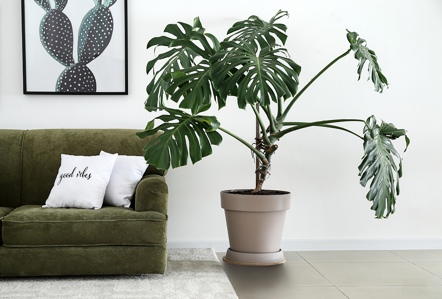 Monstera and Split-Leaf Philodendron: Is There a Difference Between the Two?