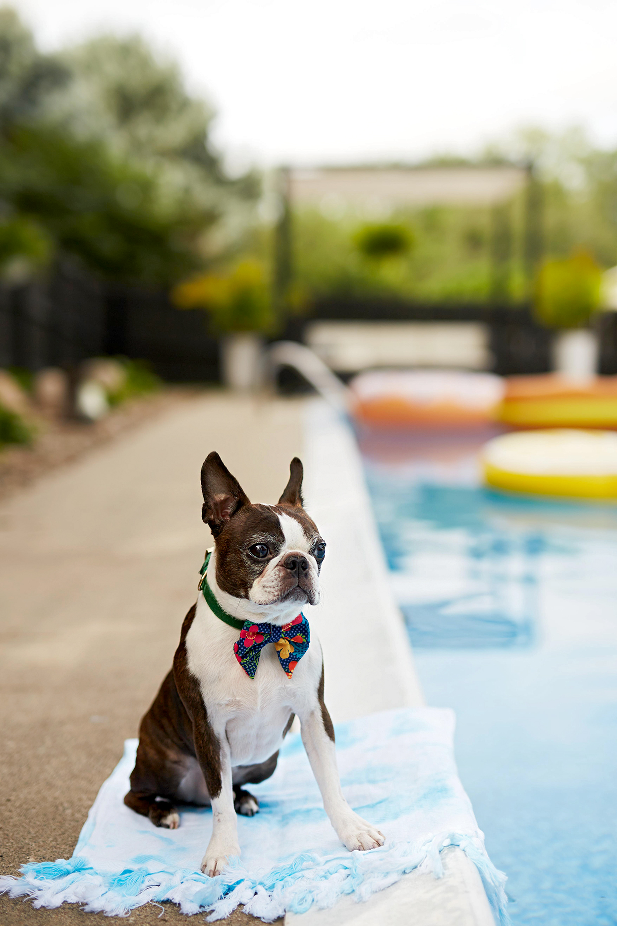 10 Genius DIY Ways to Keep Your Pet Cool in the Summer