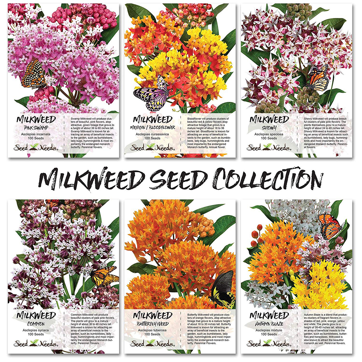 Six seed packets of different types of milkweed with illustrations on packet