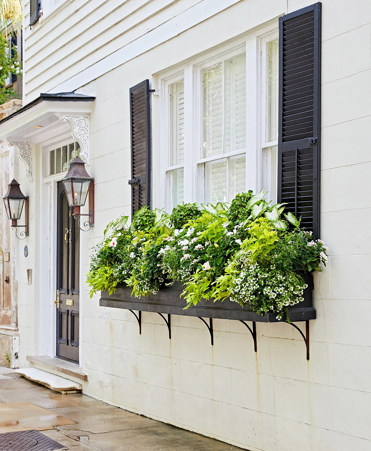 How to Plant a Window Box