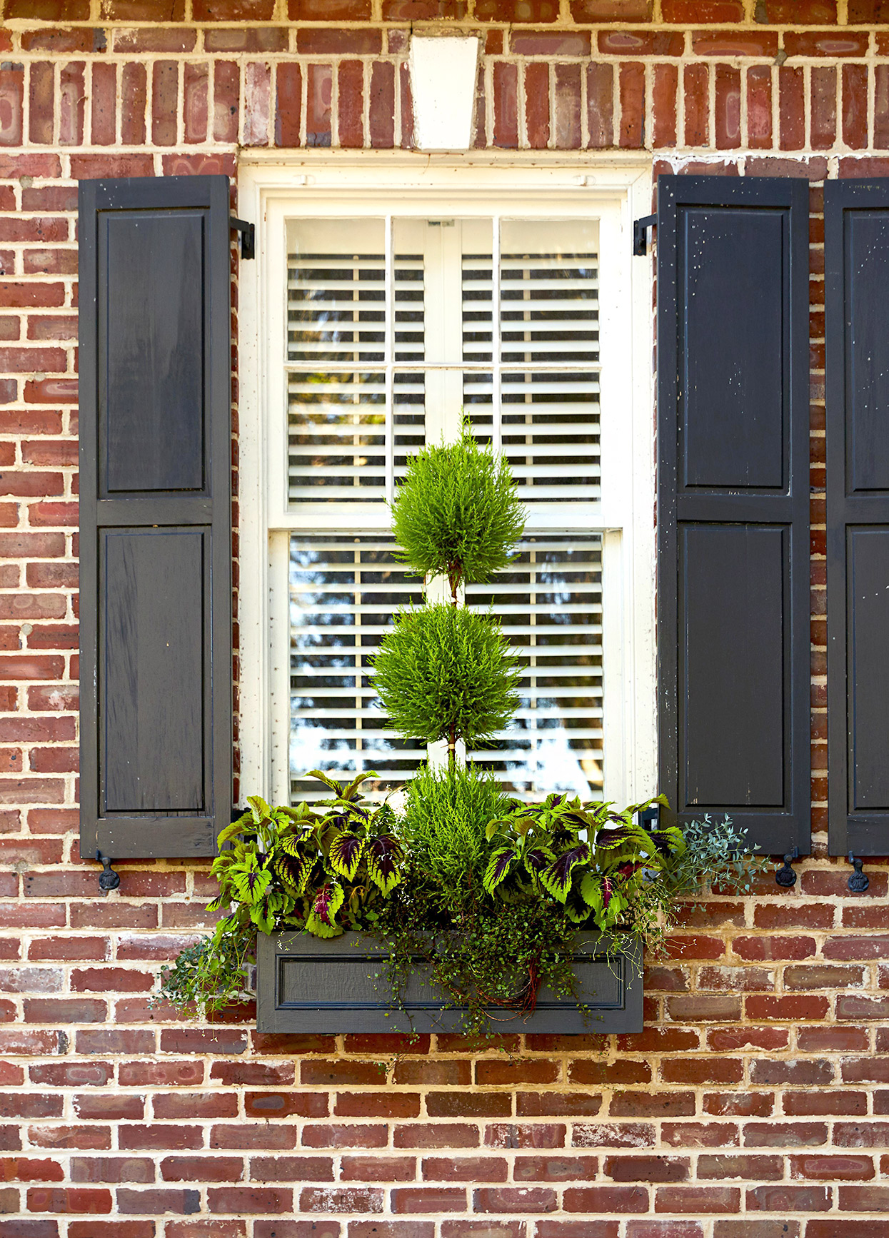 window box featuring topiary coleus and wire vine