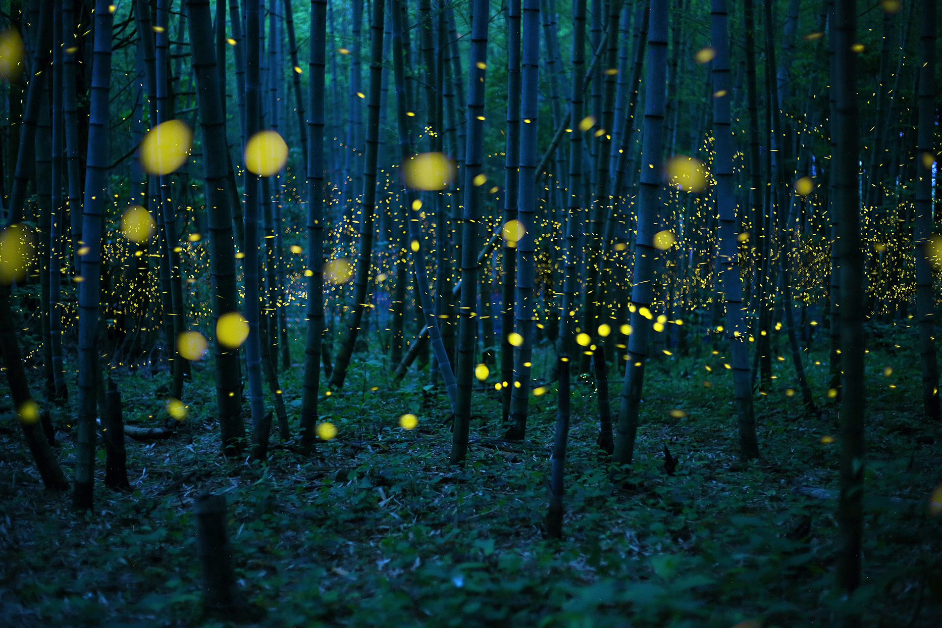 Glowing dragonflies in a dark forest of thin trees