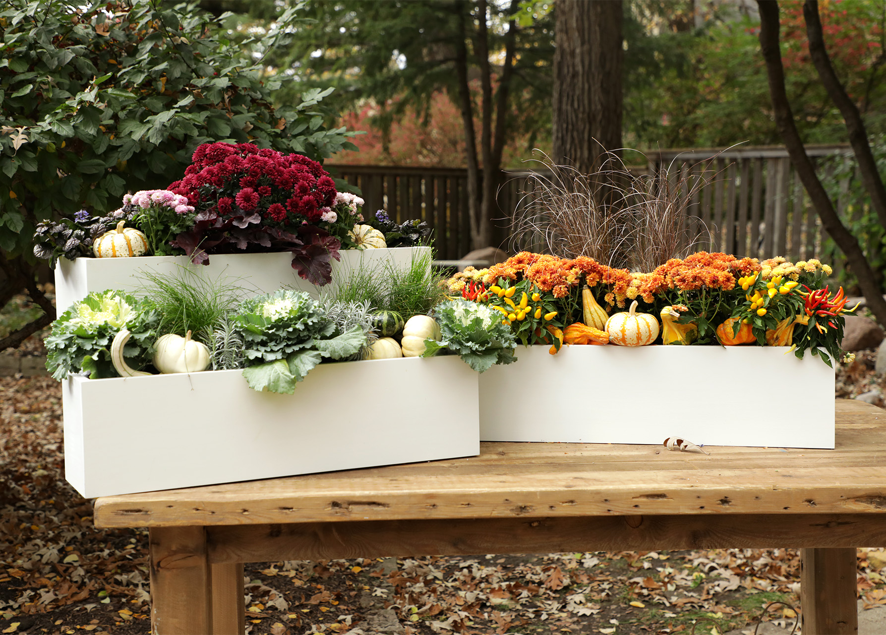 three fall window boxes with mums, kale, gourds and squash