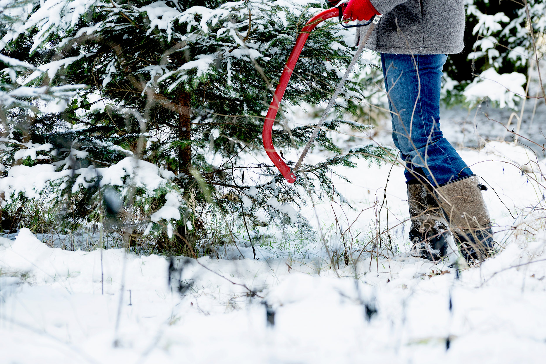 Person holding saw to cut down Christmas tree