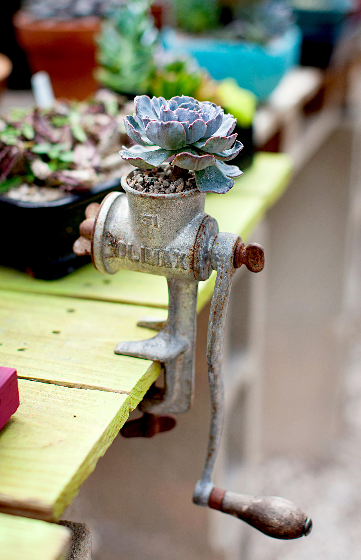 Meat grinder used as succulent planter