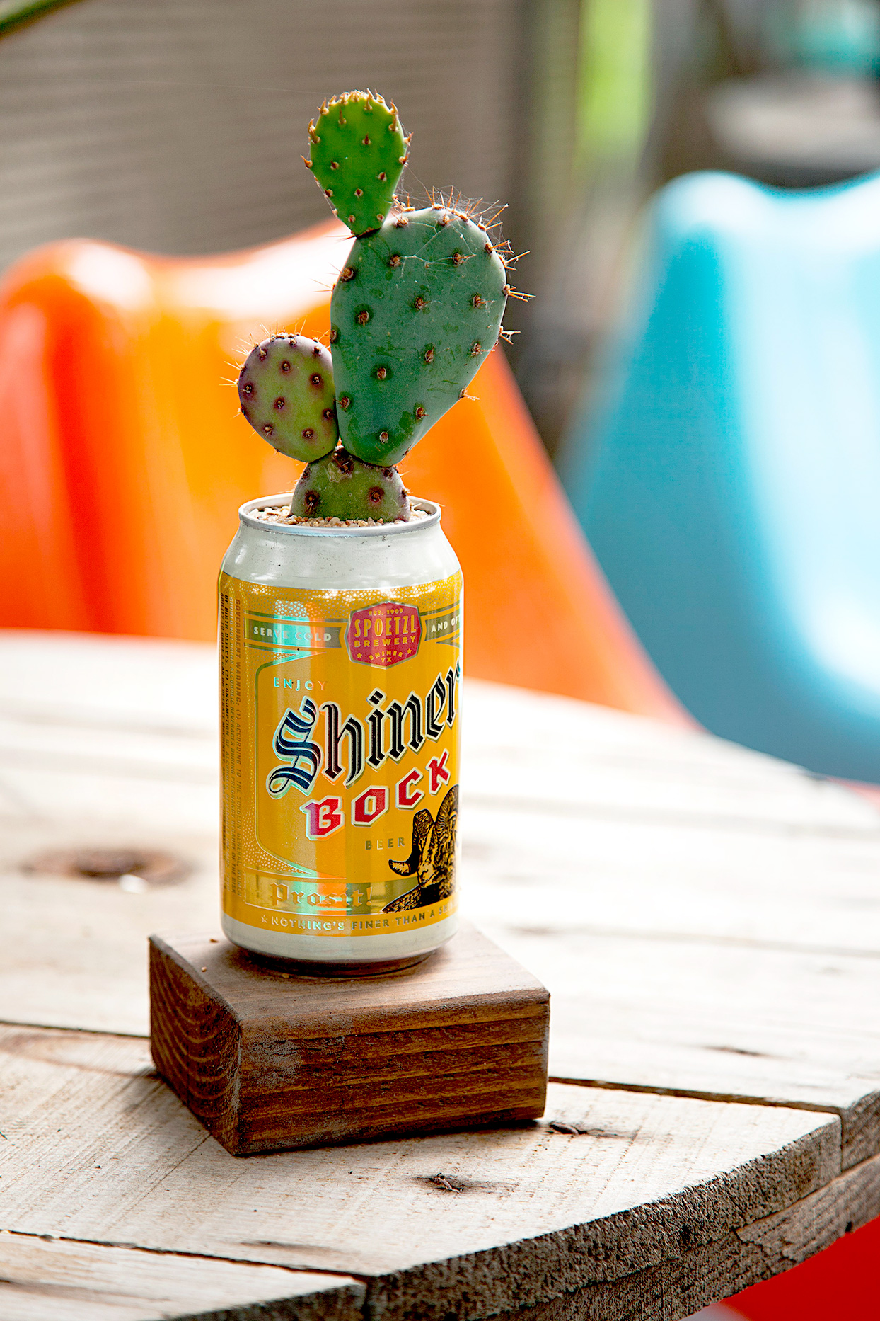 Shiner Bock can used as cactus planter