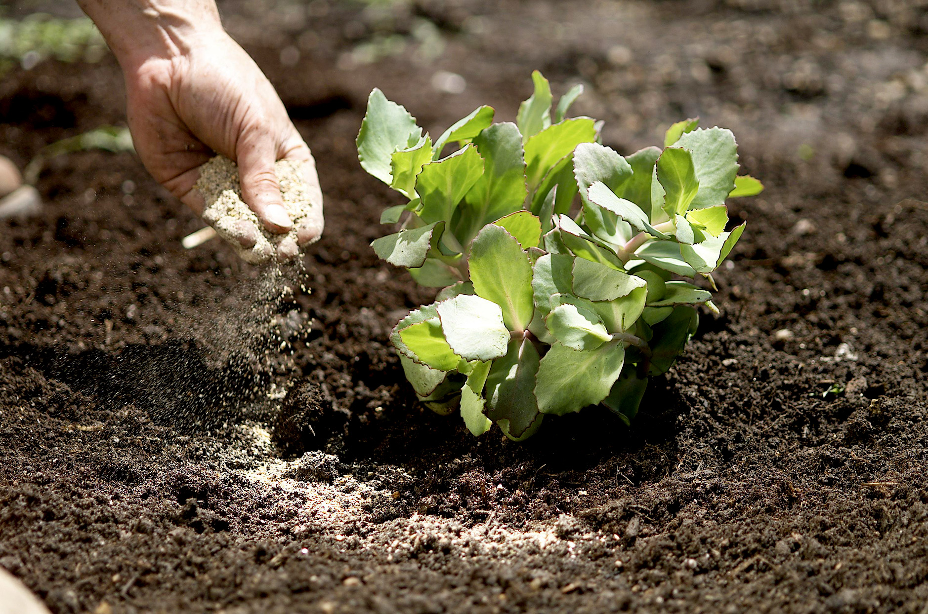 Hand placing material on plant in garden