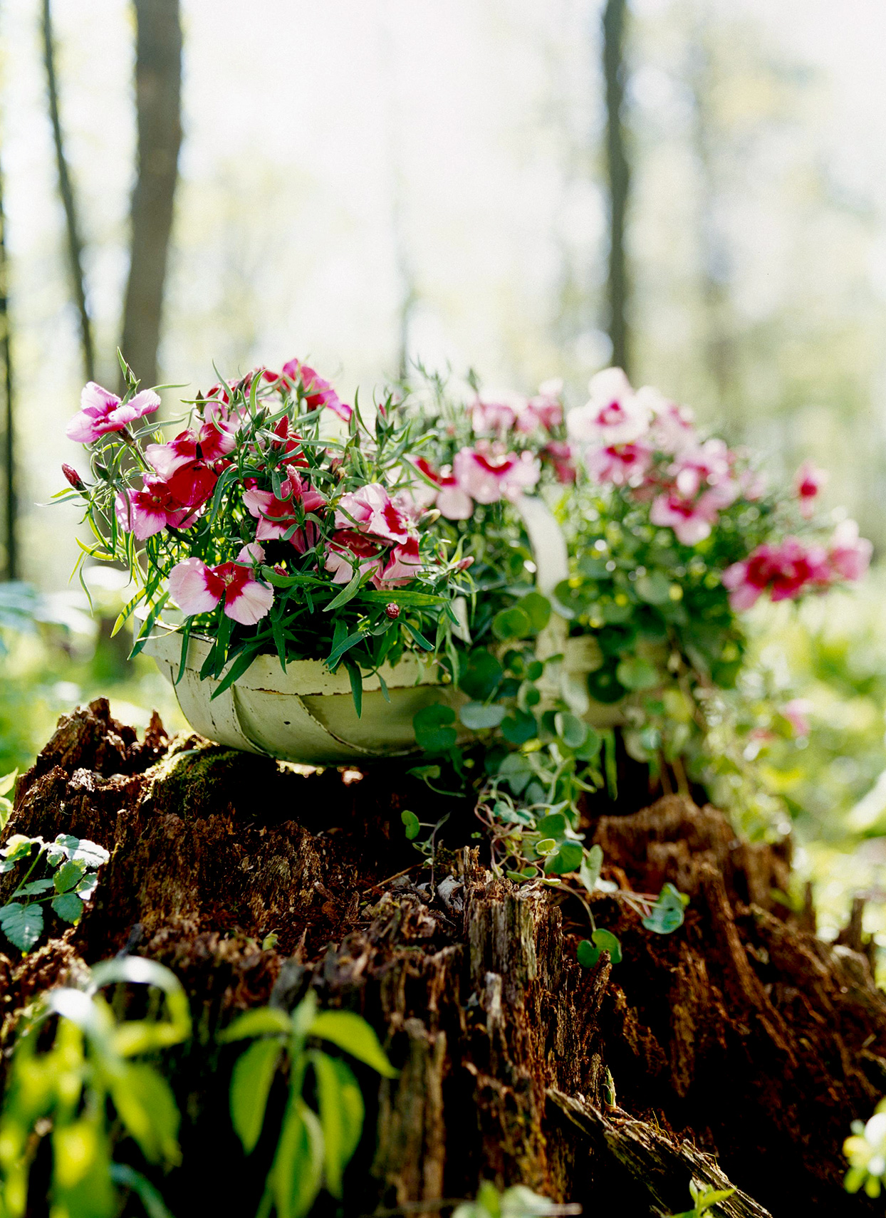 Pink and fuchsia dianthus with greenery in trug