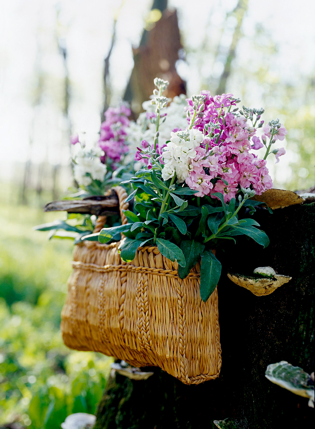 Pink and white stock flowers in woven basket