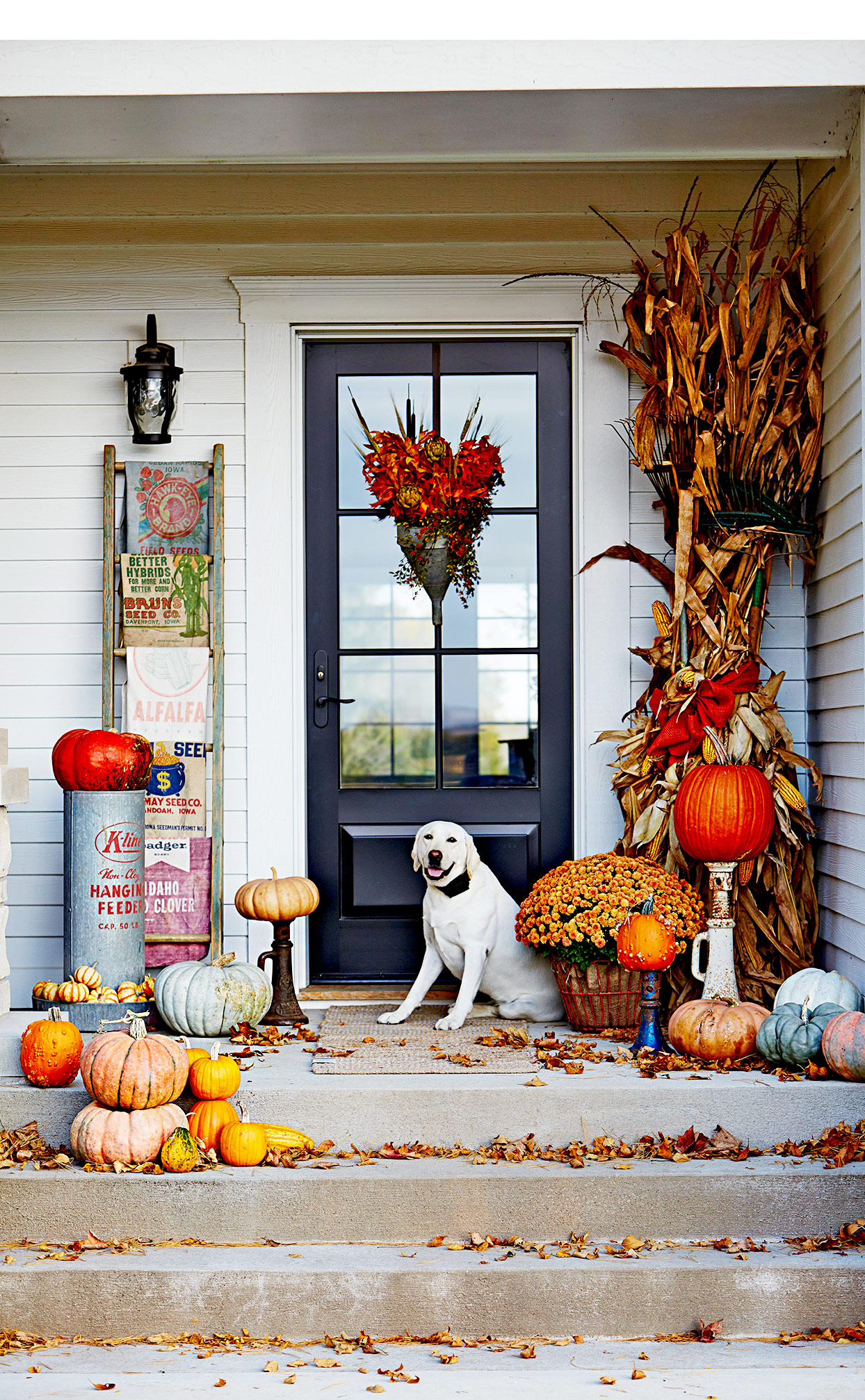 Dog on front porch with fall décor