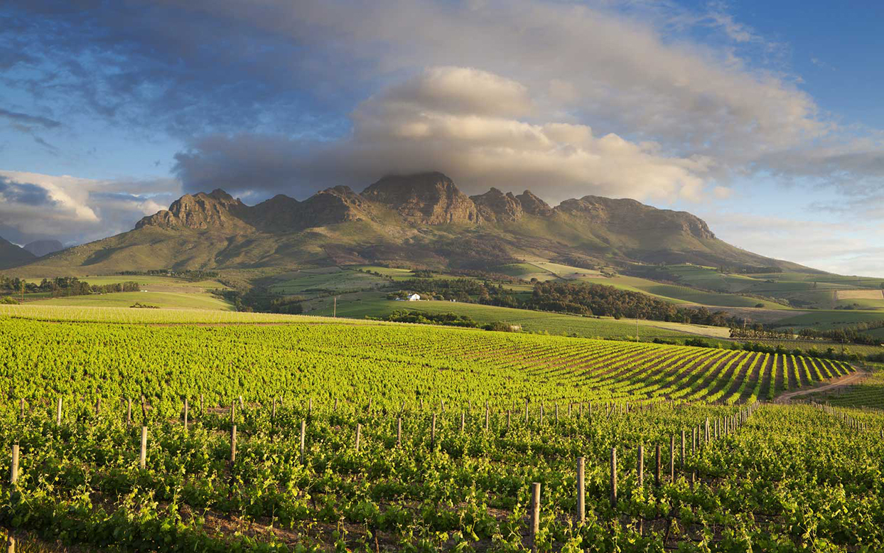 field with mountains in south africa