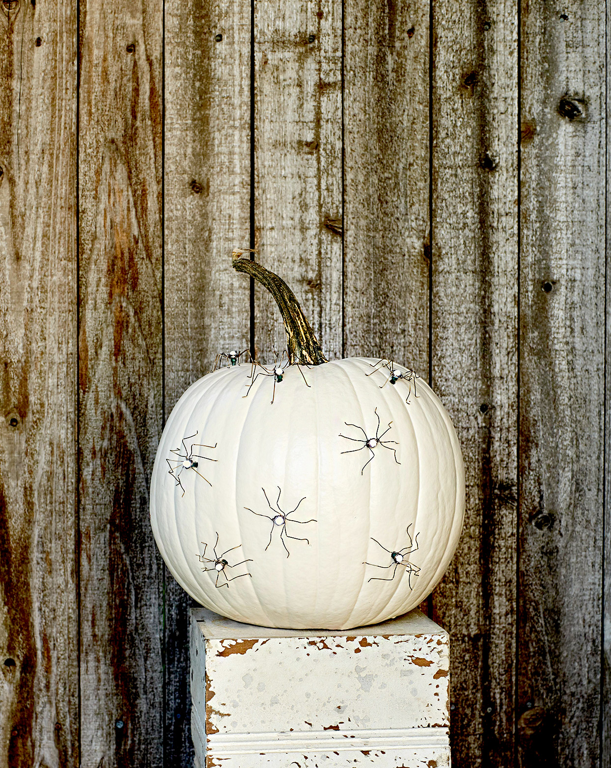 White pumpkin with spiders